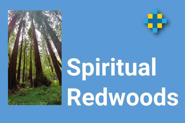 Spiritual Redwoods