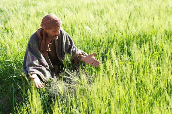 Traditional Worship | Wheat and Weeds